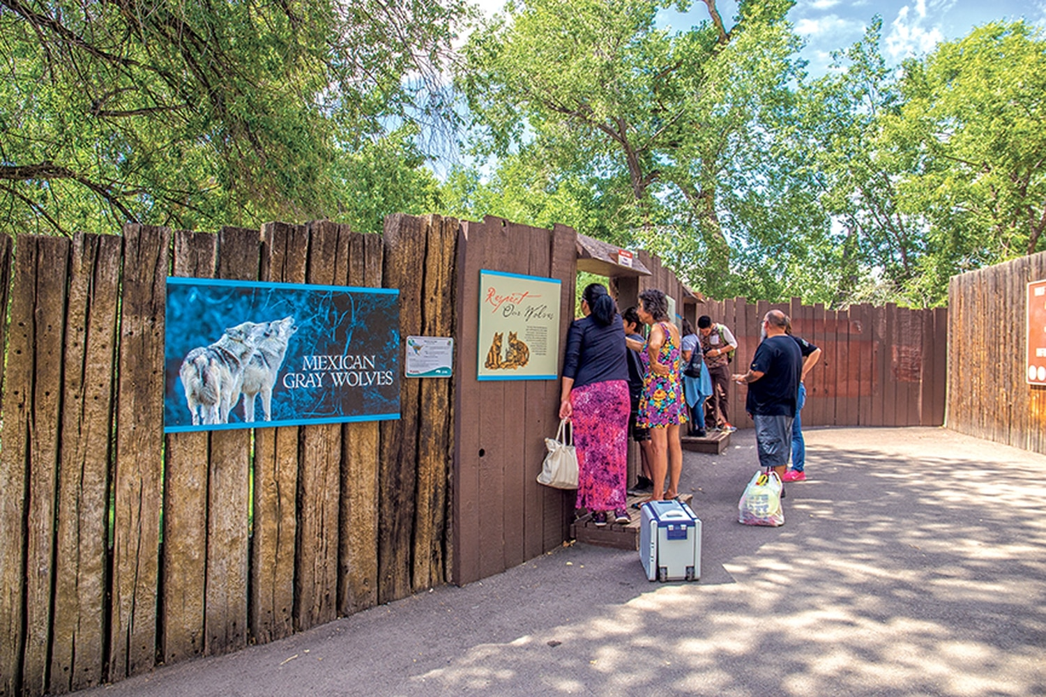 Albuquerque's BioPark Zoo is the only place many New Mexicans will ever see a live wolf.