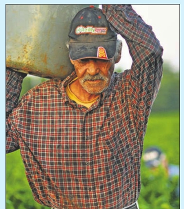 """Wage theft common in state'schile fields BY JOSEPH SORRENTINOVictor Medina is a chilero, a chile worker. A slight man of 72, he's worked in the fields almost his entire life and it shows: He walks bent over with a shuffling gait. One morning in early October, he left El Paso, Texas, where he lives, to pick green chiles in New Mexico. He arrived in Deming at 6 am, waiting an hour before it was light enough to work. Chileros are paid piece-rate which means they're not paid by the hour but for how much they pick. This year, it was usually 85 cents for a 20-pound bucket of chiles. Medina filled 60 buckets, grossing $51. According to the receipt the contratista (labor contractor) gave him, Medina worked six hours; his hourly wage was $8.50, a dollar higher than New Mexico's minimum wage. But Medina actually worked eight hours and his hourly wage was only $6.38. Federal law requires that all workers, including those working piecerate, must earn at least minimum wage. Medina should have been paid $60. Instead of paying that extra $9, the contratista """"shorted"""" Medina's hours, writing down fewer hours to boost his hourly wage. It was in no way unusual. Wage theft is rampant in New Mexico's fields. A recent survey of 253 farmworkers by the New Mexico Center for Law and Poverty found that two-thirds of those surveyed reported having wages stolen the previous year. Maria Martinez Sanchez, an NMCLP attorney who helped conduct the survey, said shorting hours is the most common way workers have their wages stolen. But it's not the only way. Many farmworkers are driven to the fields in buses or vans provided by contratistas. They typically arrive while it's still dark and wait until it's light enough to begin picking. According to Sarah Rich, an attorney at Texas Rio Grande Legal Aid, the Portal-to-Portal Act, a federal law, states, """"Once (workers) get to the farm and they're being told to wait, they're basically there for the employer's benefit…they should get paid for that time."""""""