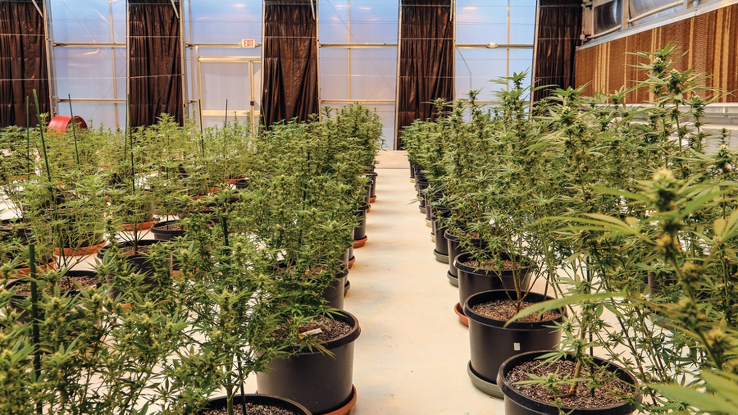Cannabis for New Mexico patients has been limited by plant cap that's due to change.