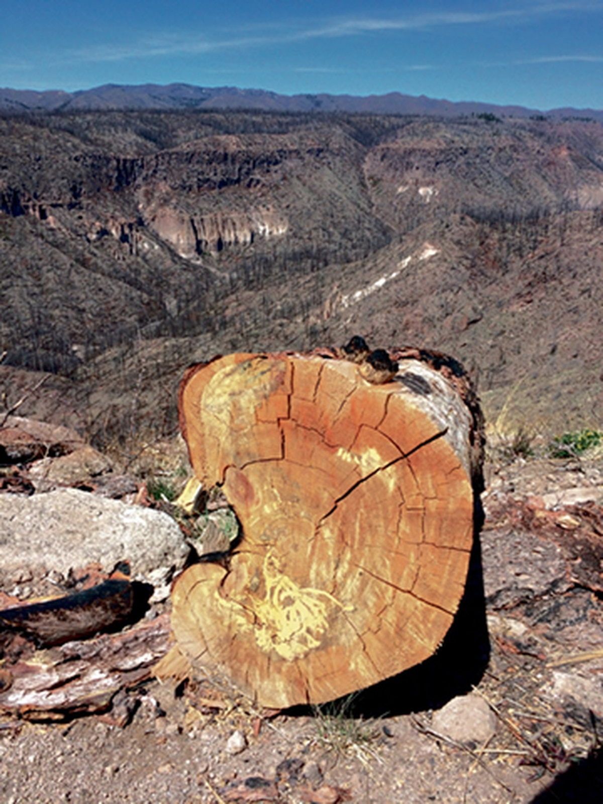 The pine forests haven't—and won't—return to Cochiti Canyon.
