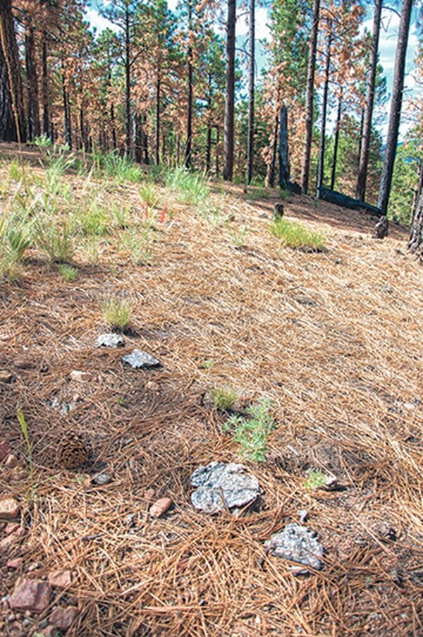 This summer, cowpies littered the ridgeline near the boundary of the Santa Fe Watershed.