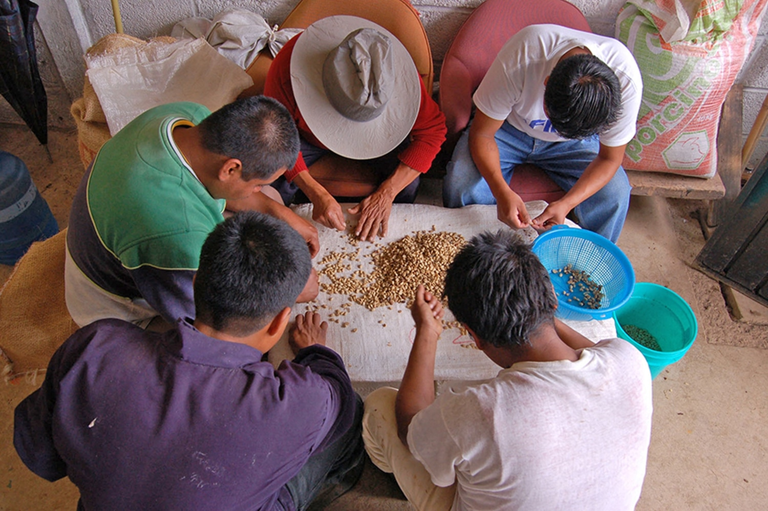 Coffee growers in sort beans in the village of  Xiloxochico, in Puebla, Mexico.