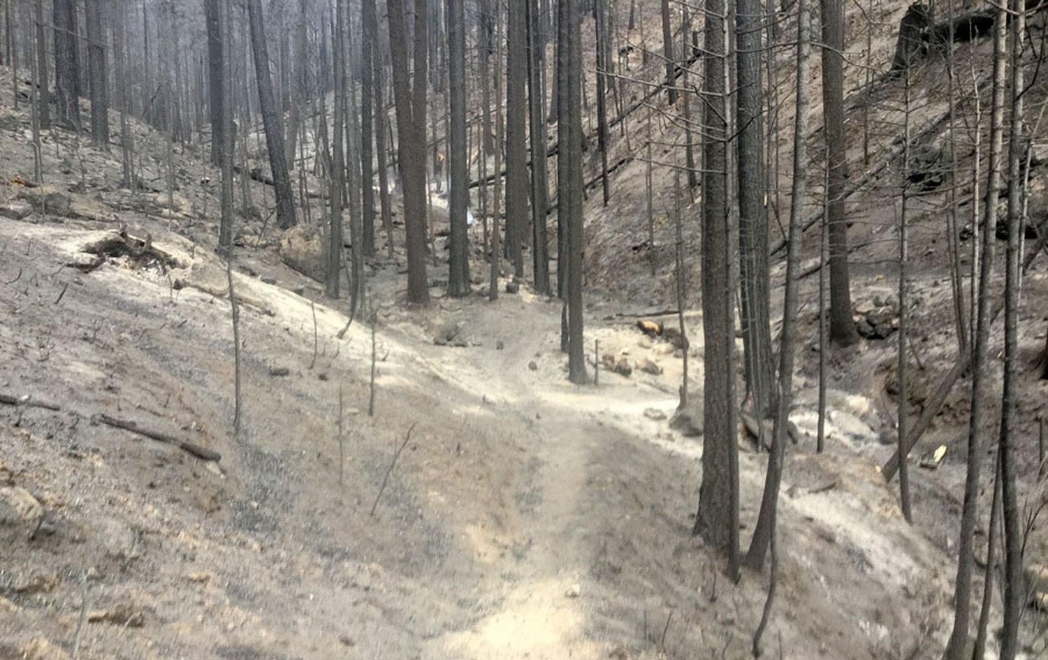Around 100 acres within the scar of the Medio Fire burned at high severity, leaving nothing but snags and ash behind.