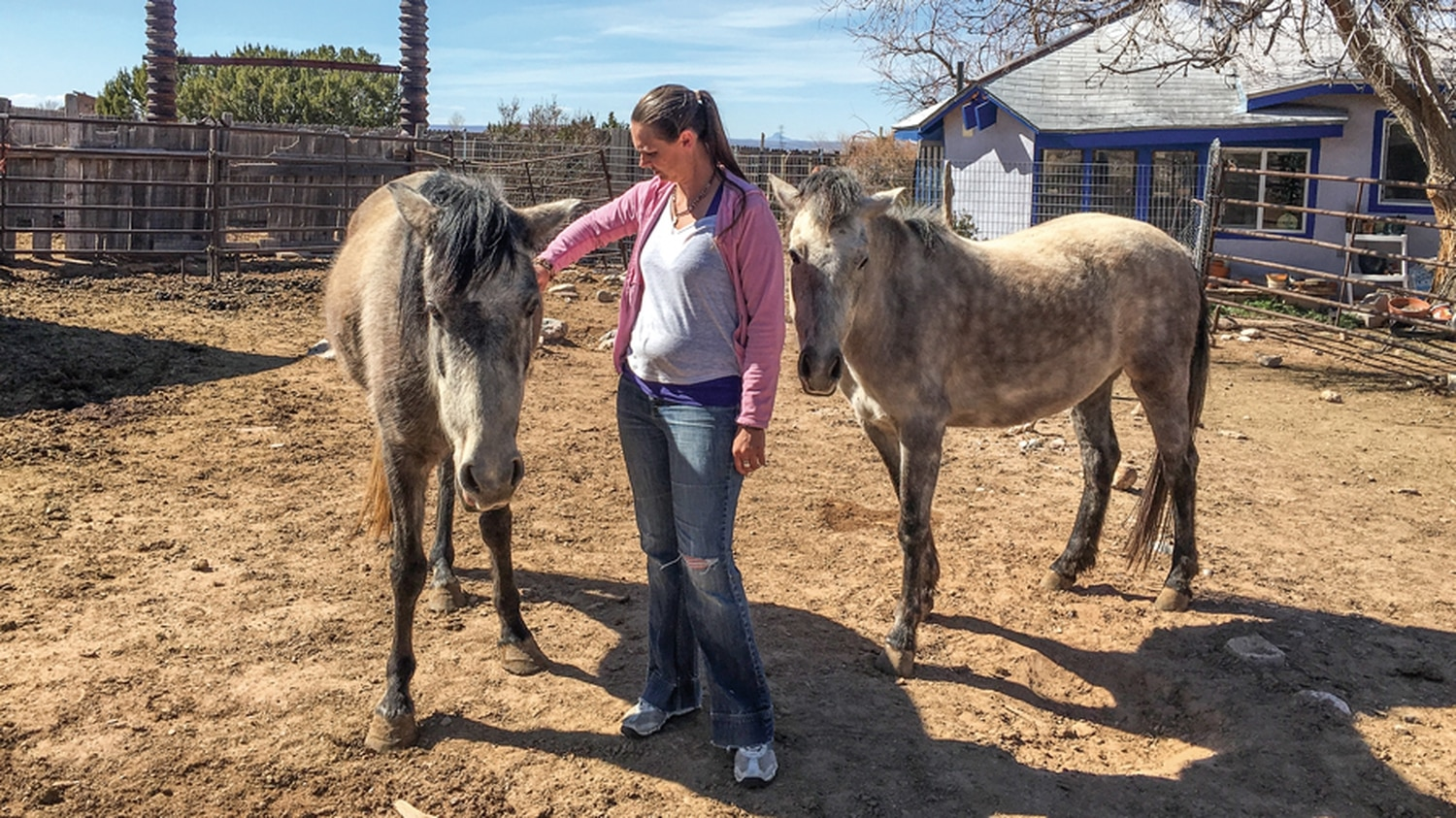 Clea Hall grooms two of the wild horses that she rescued after roundups in 2013.