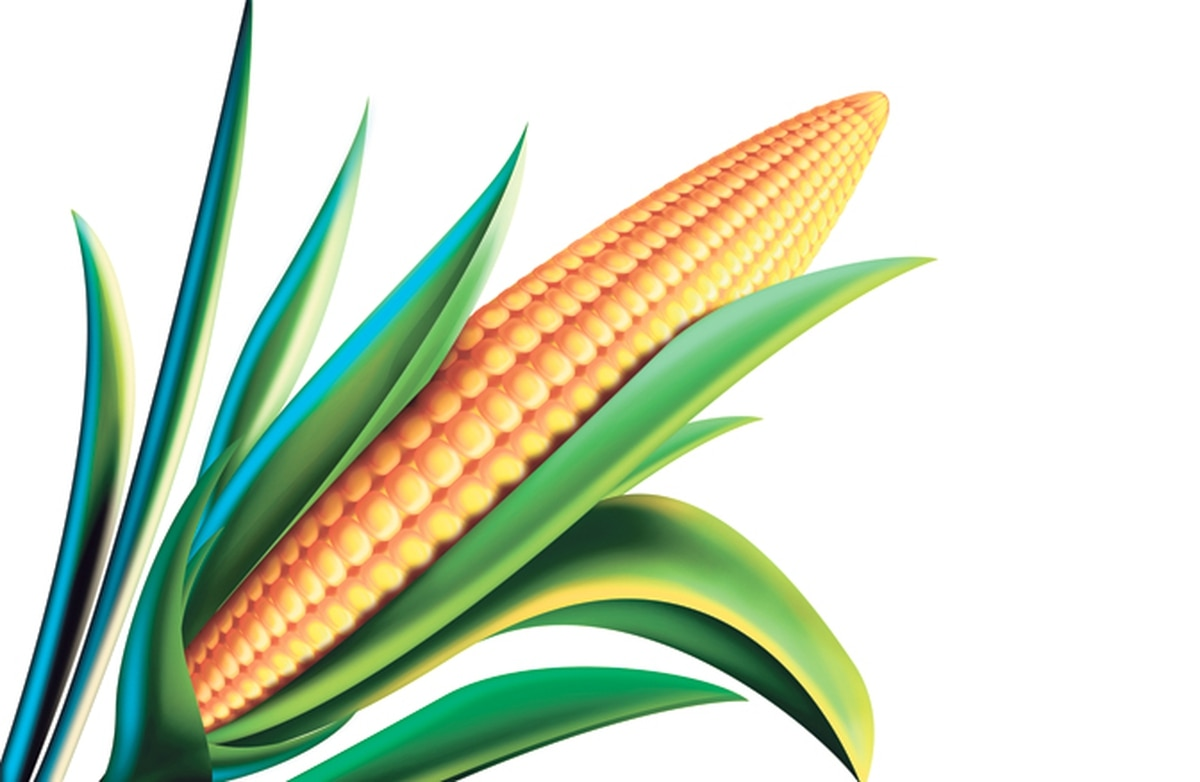 king corn essay Rev martin luther king,  king corn | cheap research essays  king corn summary - term paper read this essay on king corn summary.