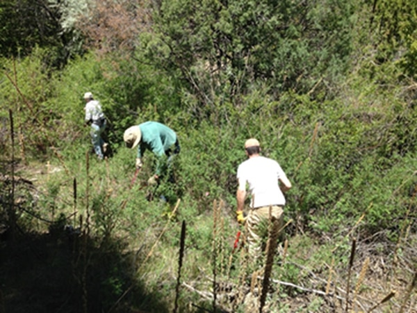 """Dense foliage along the Dale Ball """"jungle section"""" is cleared by volunteers."""