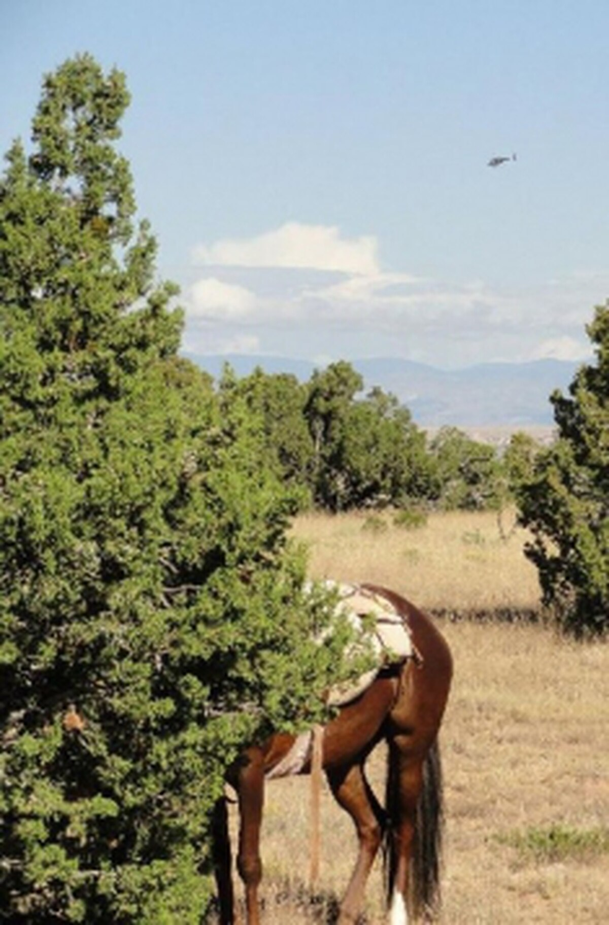 Madrid residents say the helicopter flyovers frighten livestock and pets—as well as their owners. Note the helicopter in the backround of this shot of a horse burying its head in a tree.Credits: Photo Courtesy of Marianna Hatten