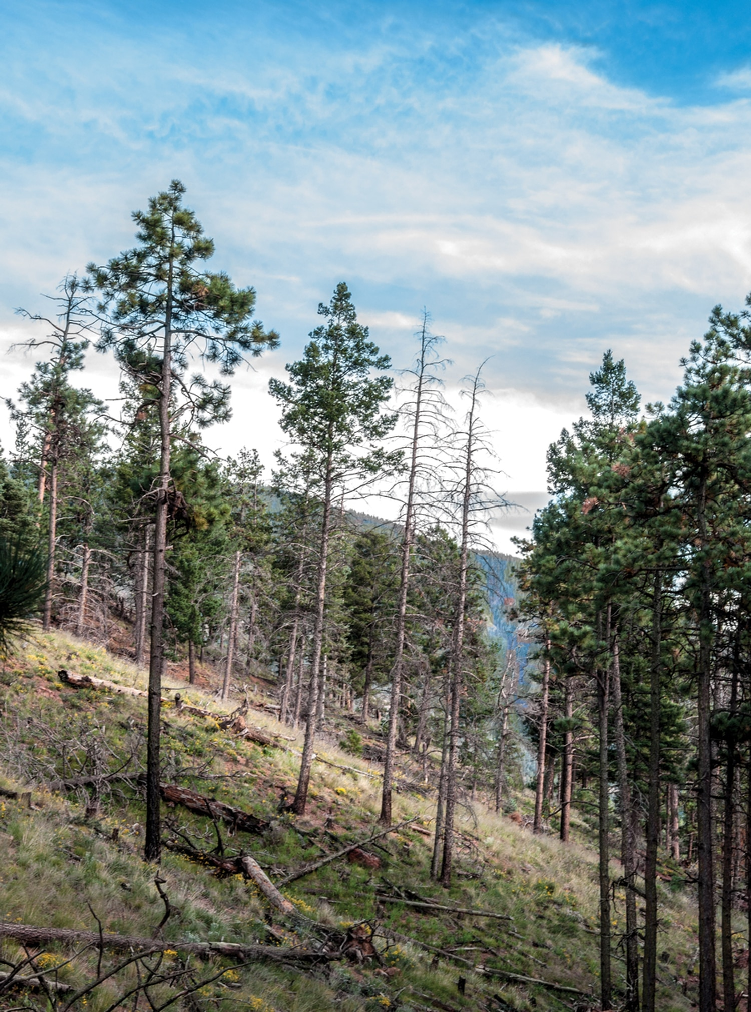 Santa Fe National Forest Service staff have been striving to make more of the forest look like this portion of the watershed, visible from the end of a trail near Hyde Memorial State Park.