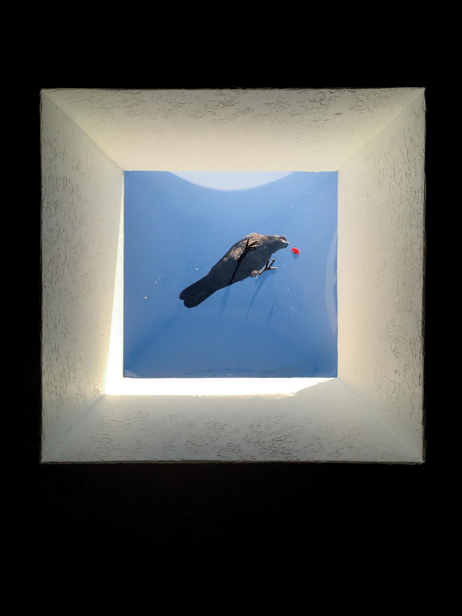 Crow Eating a Cherry |Candlelight neighborhood, Santa Fe