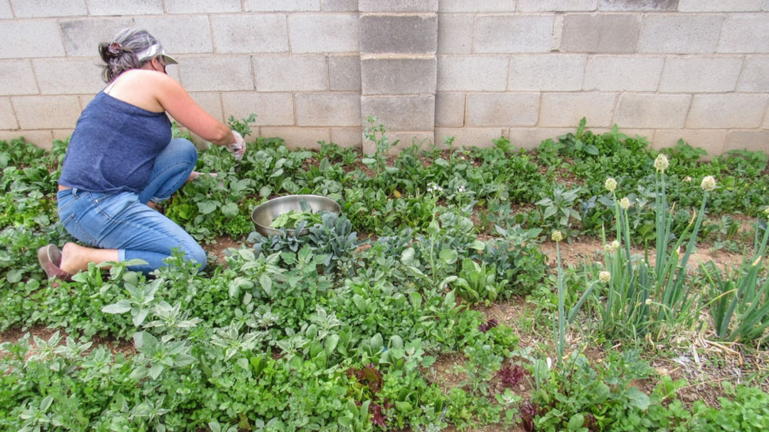 Michelle Wurth, Ras Rody's partner, harvests greens from their organic garden.