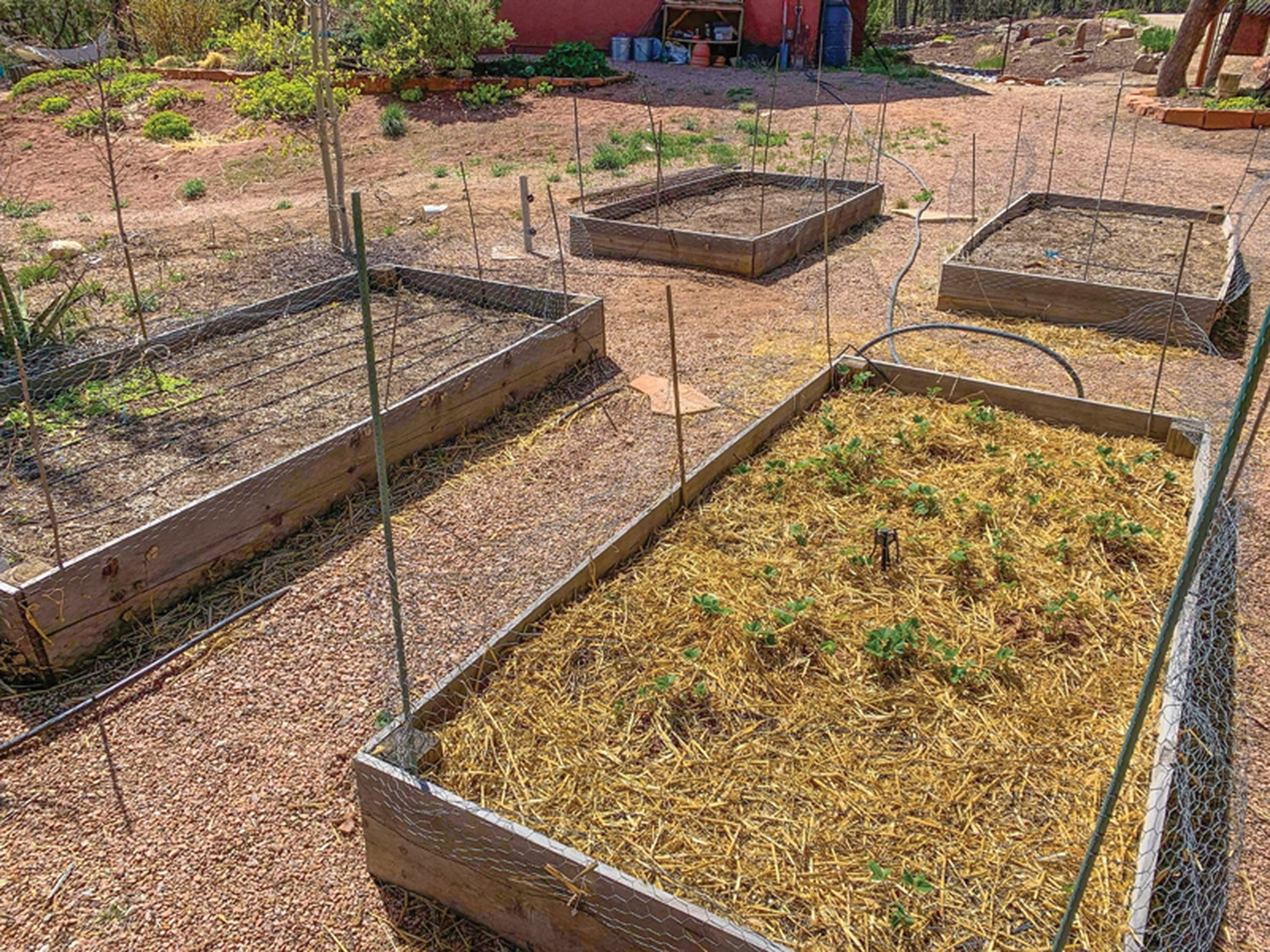 Soon the raised beds at Paul Groetzinger's house will explode with life—and no shortage of fresh, delicious food options.