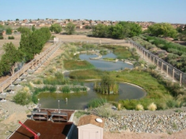 The Las Lunas refugium is one of several sites where biologists raise silvery minnows in captivity for introduction into the wild.Credits: Interstate Stream Commission