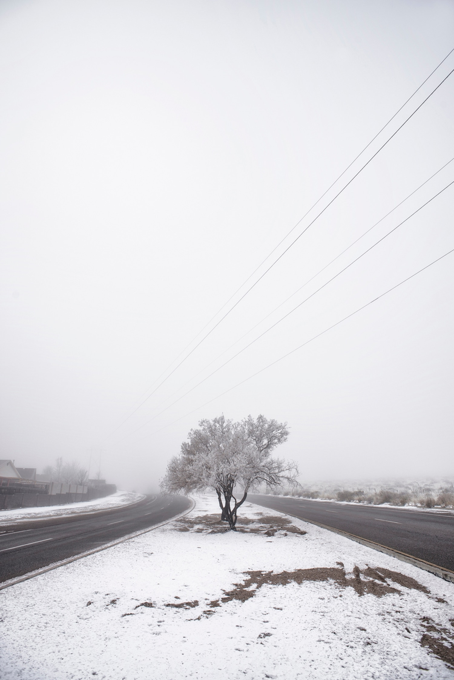 Lonely Tree, Albuquerque by Max Woltman