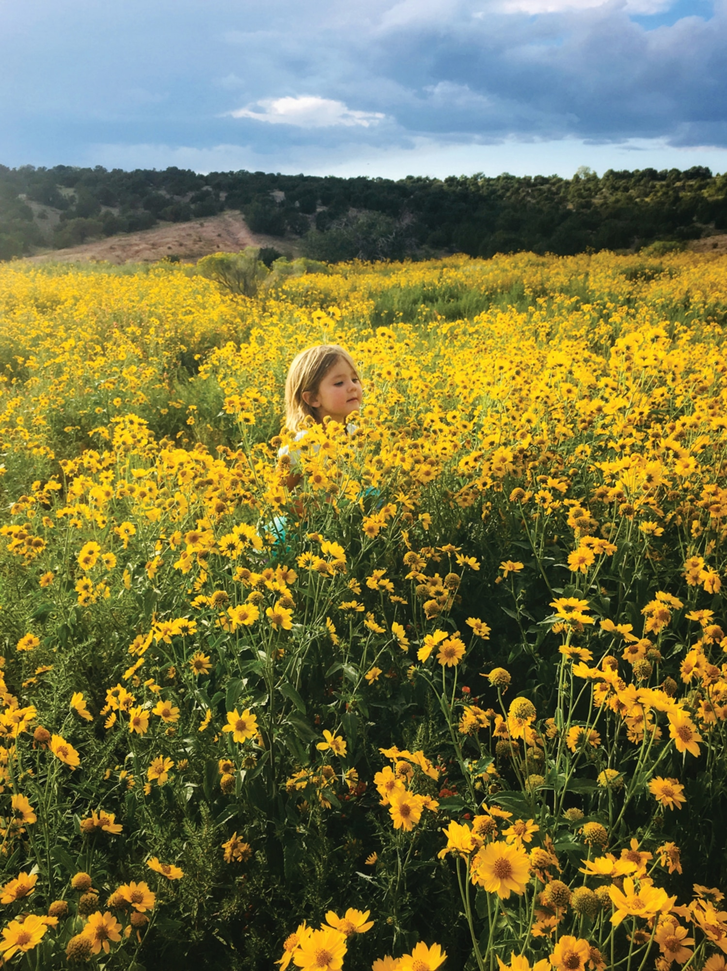 Playing in the Fields of Flowers (Frank S. Ortiz Dog Park, Santa Fe)