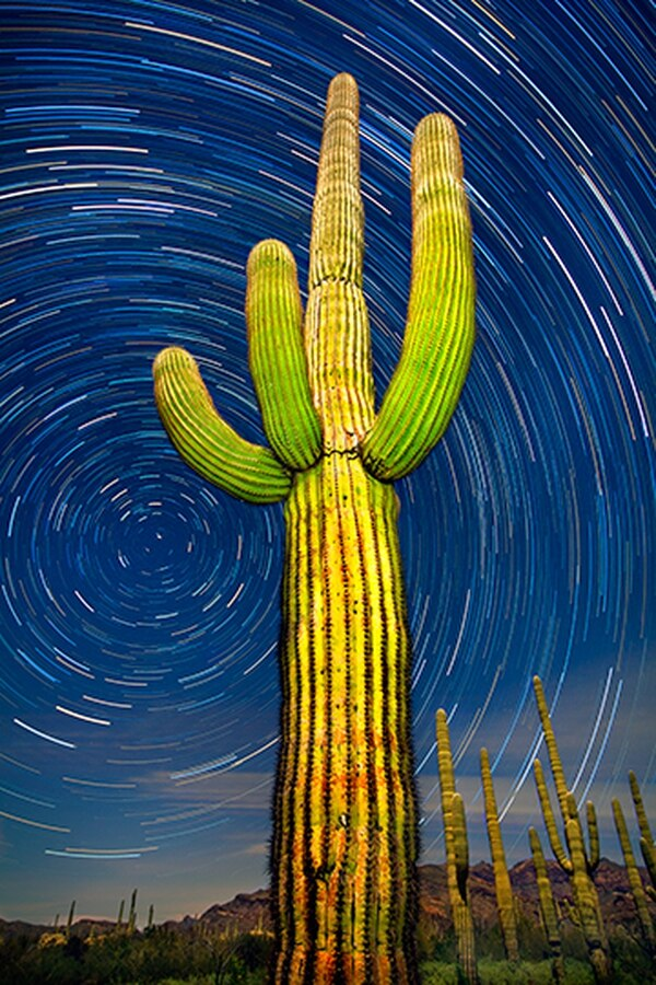 Organ Pipe Cactus National Monument, Arizona: a 75-minute time lapse of a giant saguaro and the northern sky.