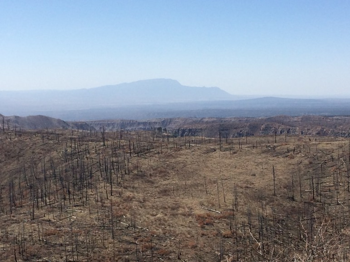 Sandia Mountains visible in the background, from the Las Conchas burn scar, six years after the fire burned through here.