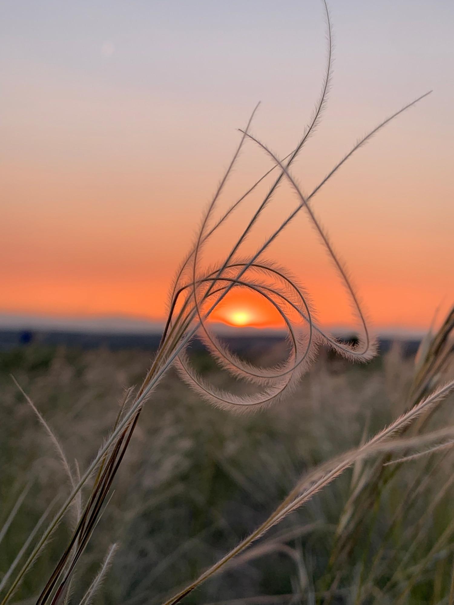 Harvest Sun |Old Fort Marcy Park