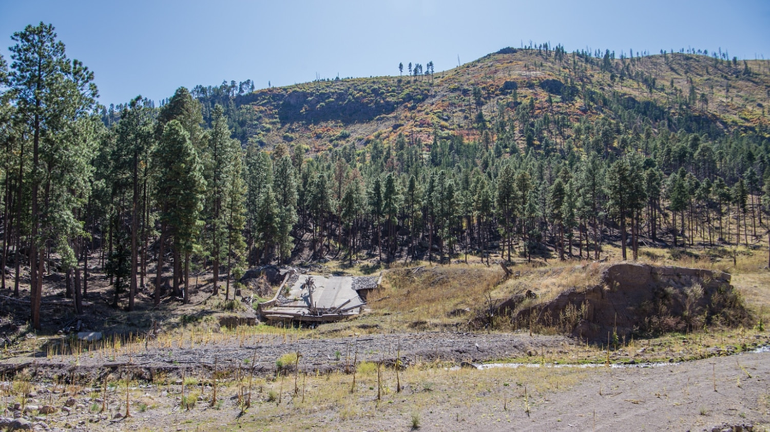 A piece of intact forest overlooks the ruins of one of the four Santa Clara dams breached by post-fire floods.