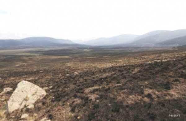 An area at Valles Caldera National Preserve days after it burned.