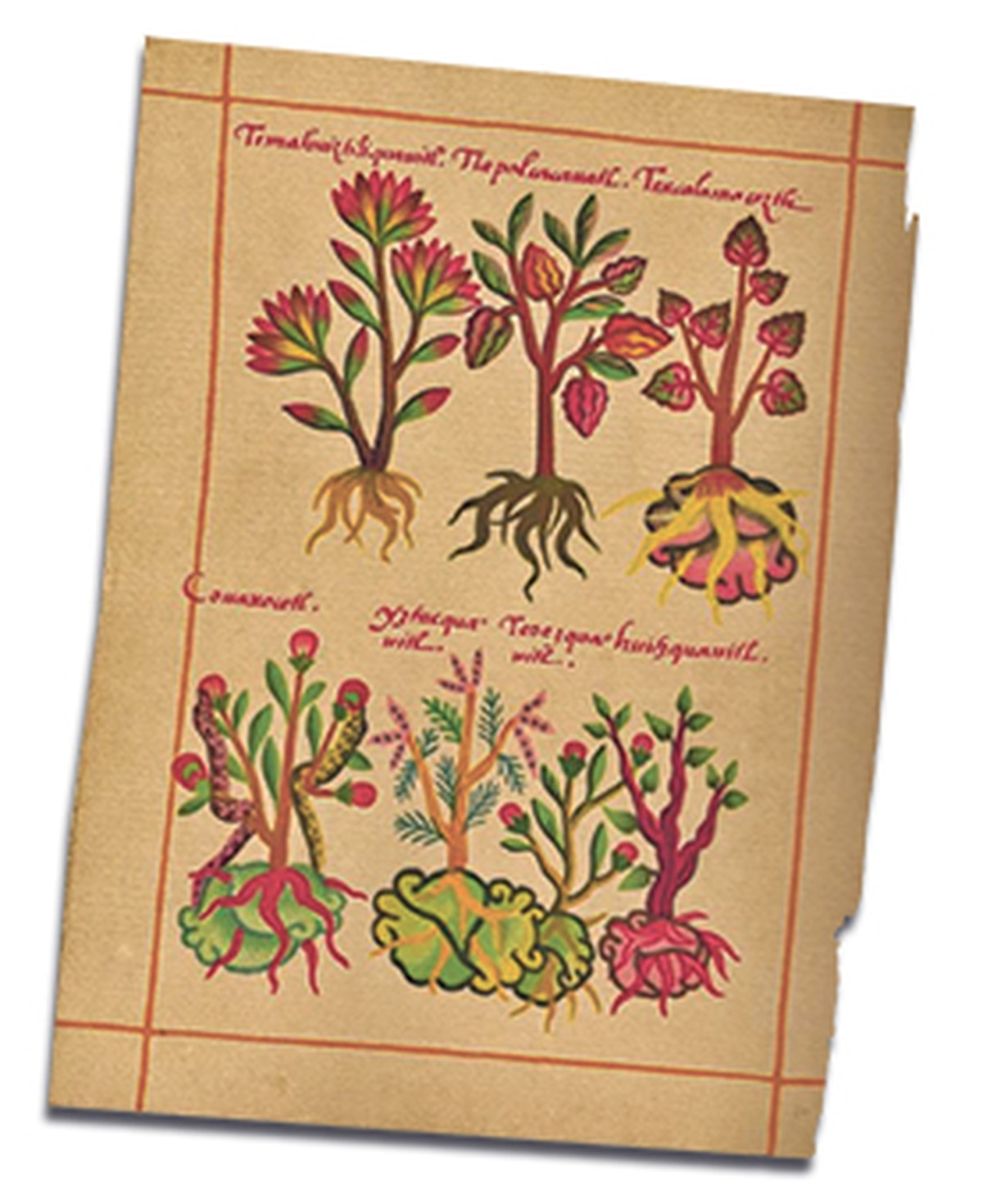 A page from the Little Book of Medicinal Herbs of the Indians.