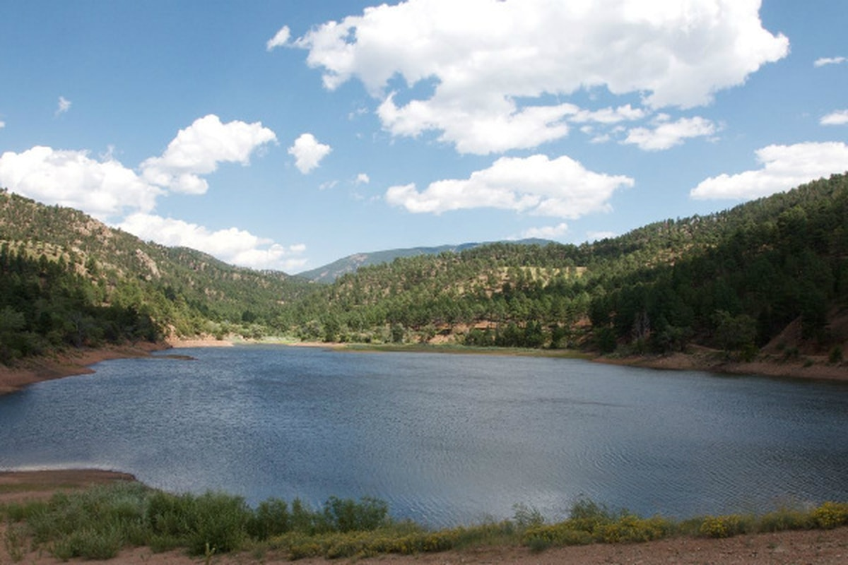 Forests near Nichols Reservoir have been thinned to prevent wildfire.