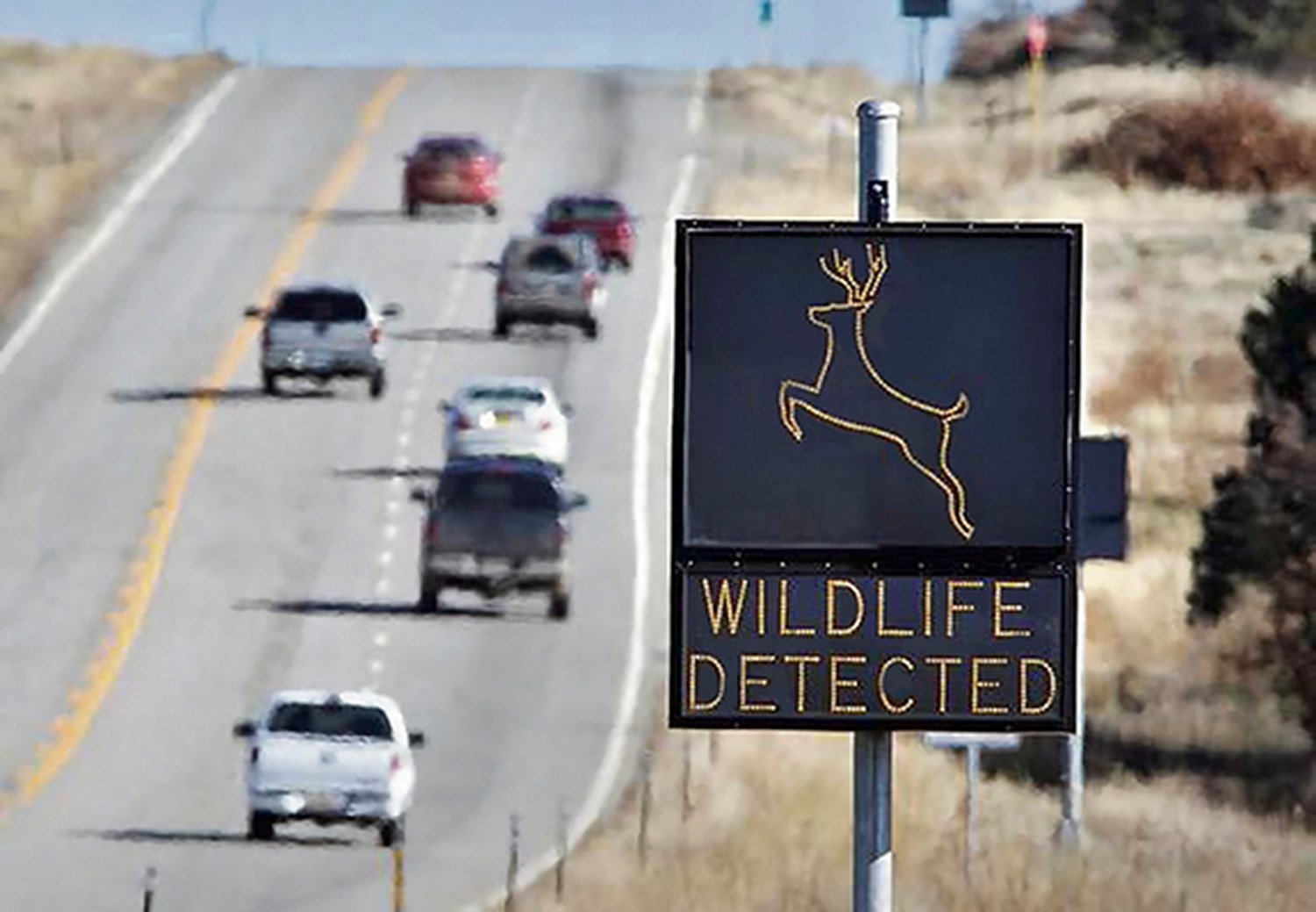 Signs like this one are intended to mitigate against wildlife-related car crashes.